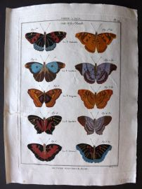 Diderot C1790 Antique Hand Col Print. Butterflies 29